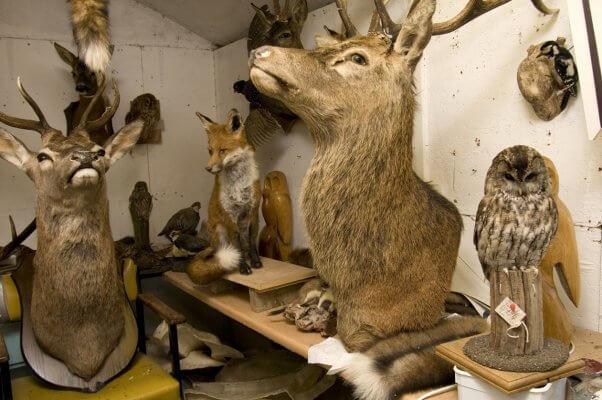 trophy hunters sport hunters trophy hunting sport hunting