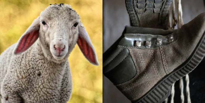 What Is Leather Made Of >> What Is Suede Made Of Is Suede Vegan Get The Facts Peta