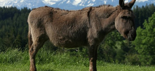 its easy to help donkeys with these peta action alerts