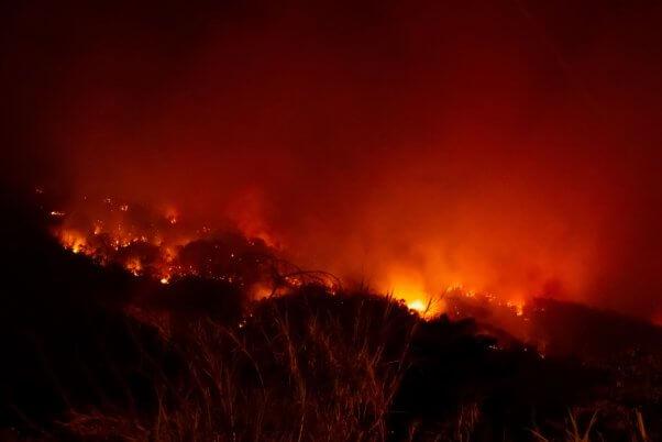 amazon rain forest fire, destruction, deforestation