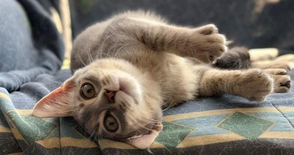 Cute rescued kitten basks in sunbeam