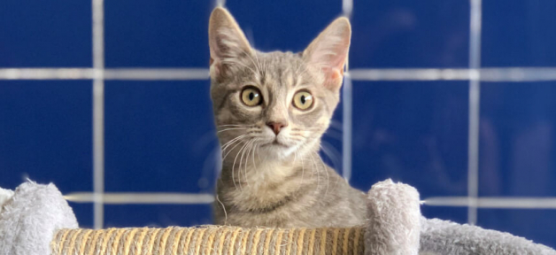 Alert rescued tabby kitten with cute elephant scratching post