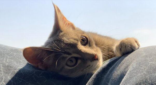 Moody shot of rescued kitten Eloise