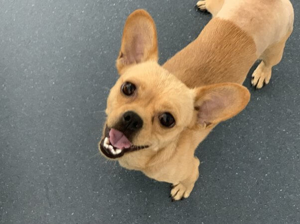 Cute photo of rescued puggle Marcus