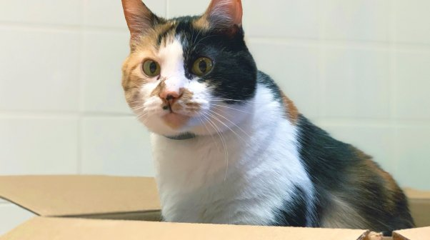 Pretty cat sitting in cardboard box