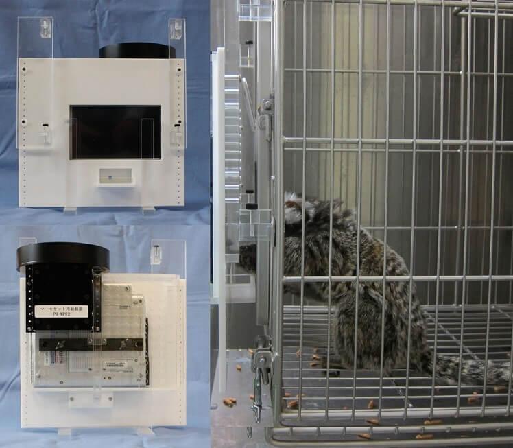 hot flashes, marmoset, experiment, vivisection, laboratory