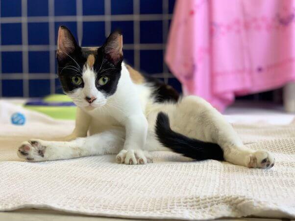 Rescued cat Tango grooming herself