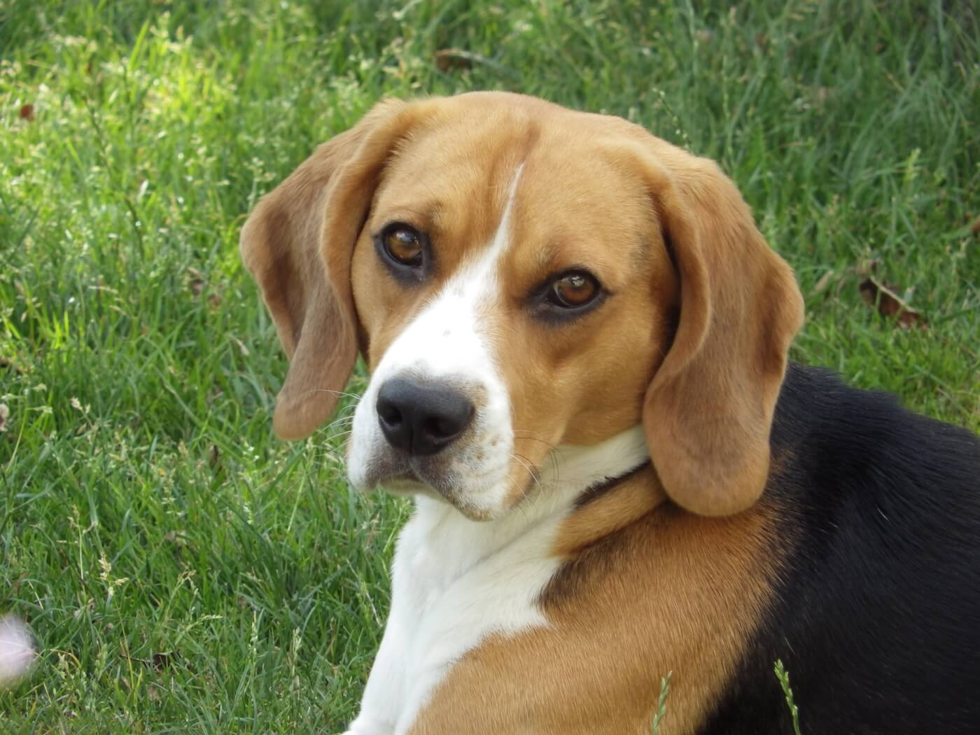 2019 Brazil Pesticide Poisoning Tests on Dogs