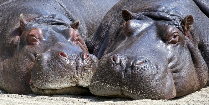 Victory! California Bans Sales of Lizard, Hippo, and Caiman Skins