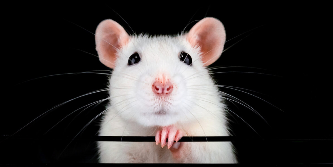 PETA Scientists to Biden Administration: Back Non-Animal Testing From Day 1