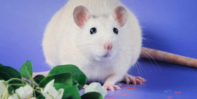 6 Empathy-Building Ways to Celebrate the 'Year of the Rat' in Your Classroom