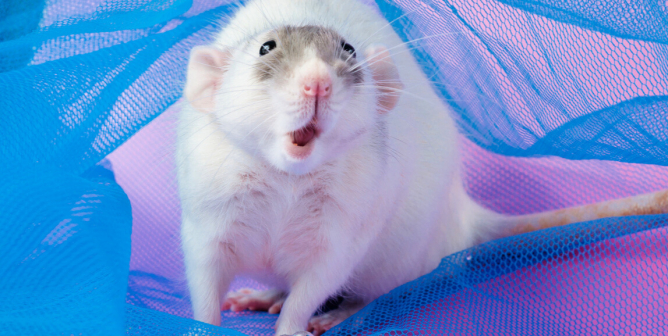 COVID-19 Proves We Can't Waste Time on Animal Tests—Help PETA End Them
