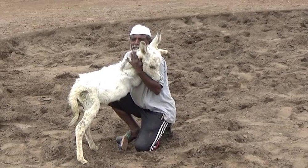 Animal Rahat