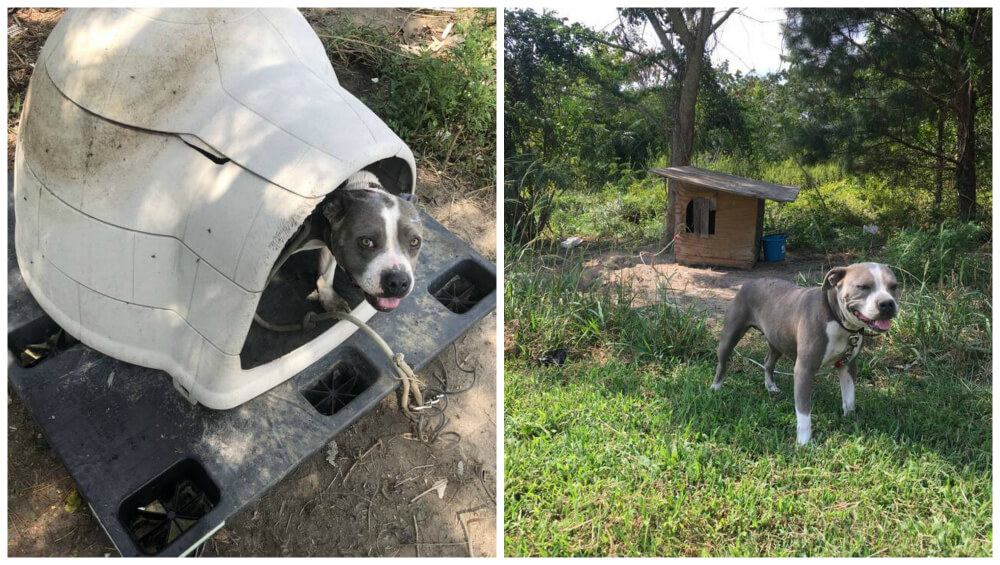 Dog House Roxy