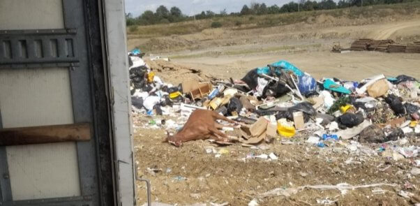 a horse's body was found dumped in trash at a west virginia landfill