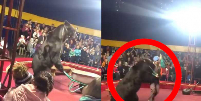 VIDEO: Children Scream As Bear Charges Abusive Circus Trainer