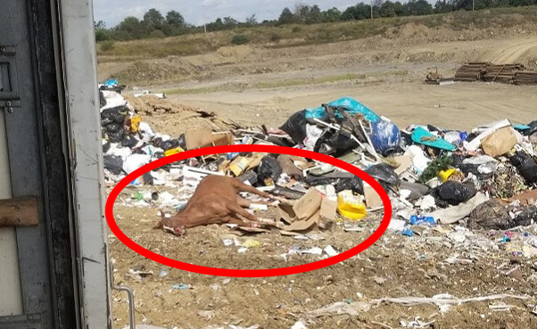 peta calls for investigation after dead horse found in landfill in west virginia