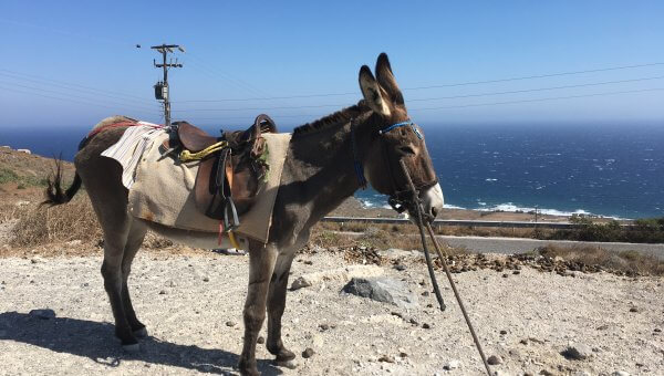 The Suffering Continues: Ban Donkey Rides on Santorini!