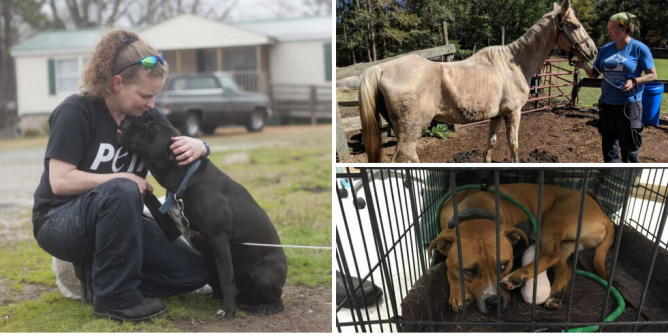 Matted Poodles, an Emaciated Horse, and Other Animals PETA Helped Last Month
