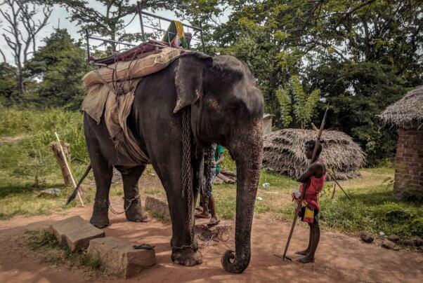 elephant rides, elephant deaths