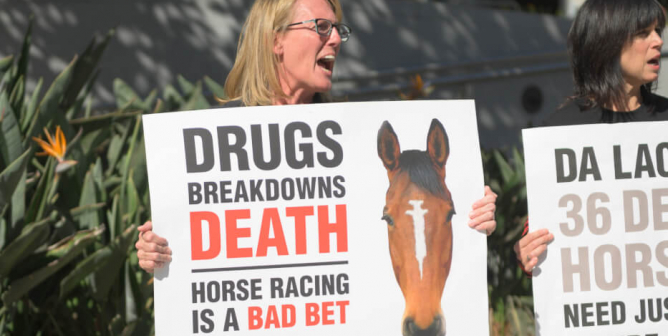 Huge Progress! PETA's Horse-Doping Investigation Changes Racing as We Know It