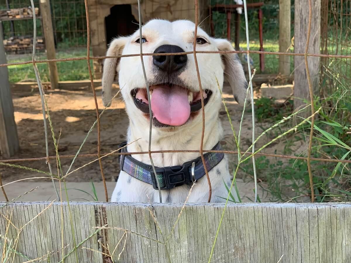 Pip, Deaf Dog Rescued by CAP