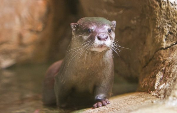 seaquest otters are suffering