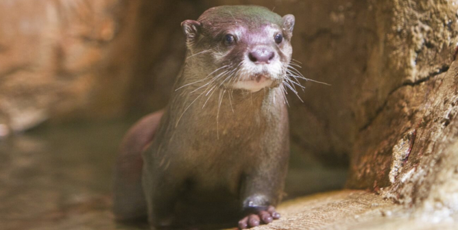 Don't Roll the Dice: All Animals at SeaQuest Las Vegas Are Unlucky
