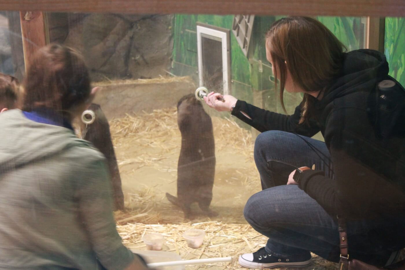 seaquest otters stressed by human interaction