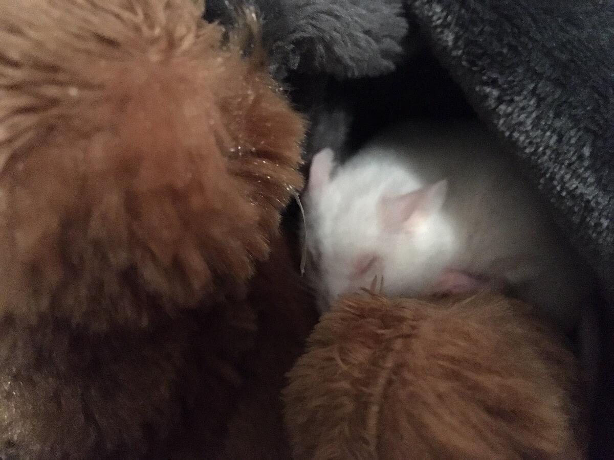 Sleeping Mouse and Teddy Bear
