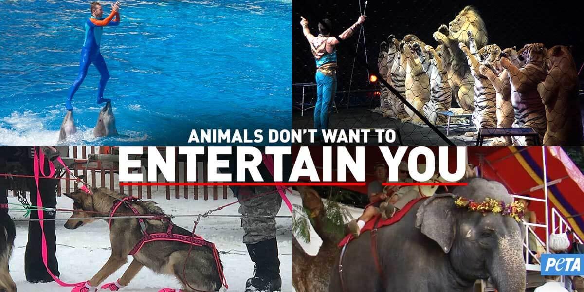animals in entertainment