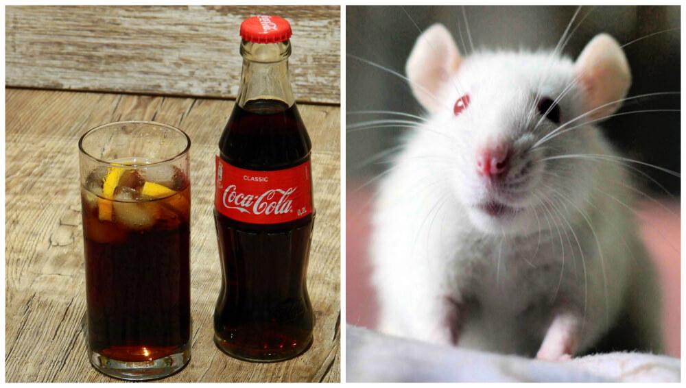 coca-cola animal tests