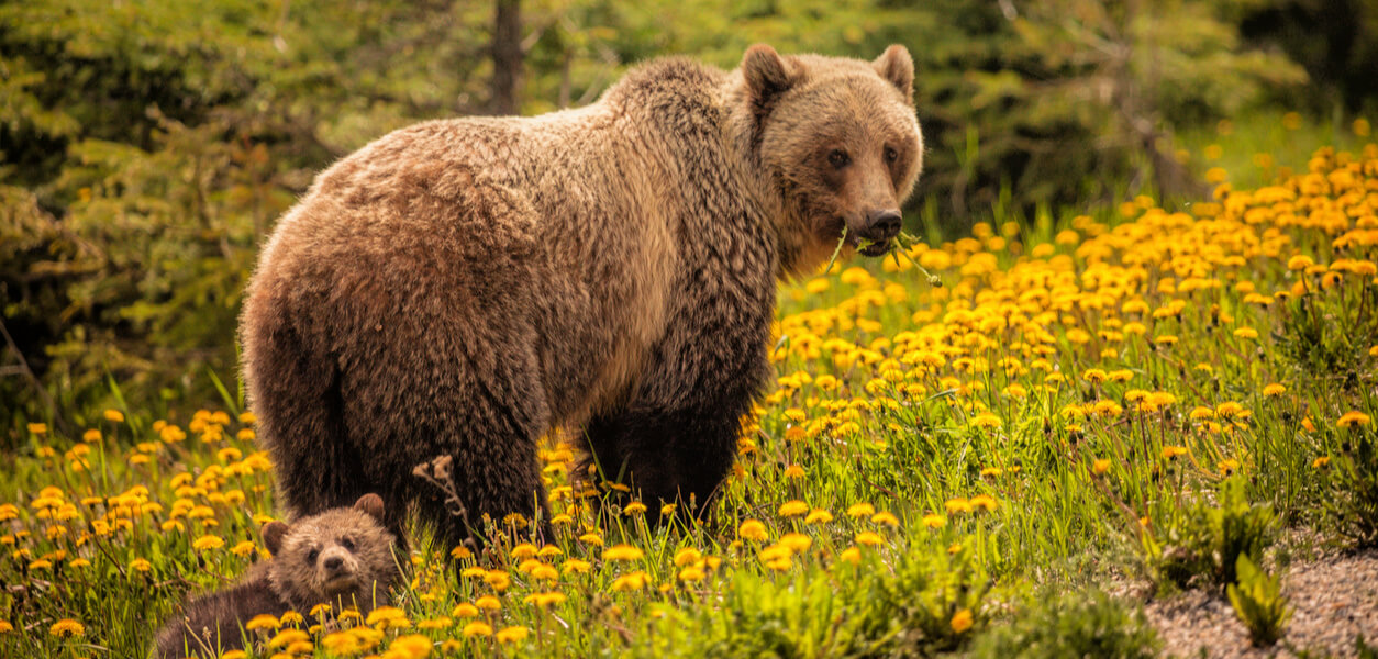 bears and other wild animals who don't want to be touched