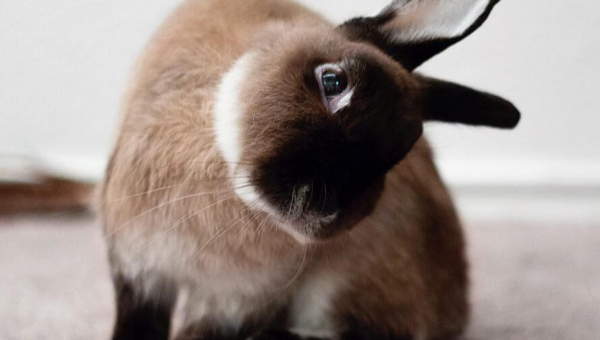 Is Your Rabbit Sick? 9 Surprising Warning Signs to Look Out For