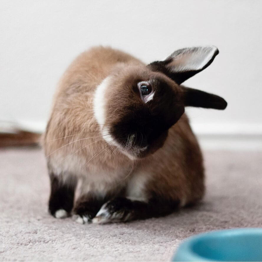 Is Your Rabbit Sick 9 Signs The Answer May Be Yes Peta