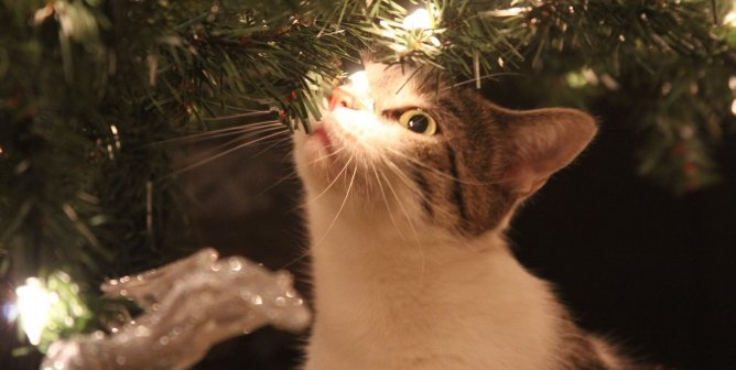 How to Help Animals During the Holidays With TeachKind