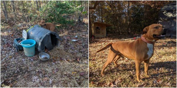 Animals Helped in November 2019 by PETA's Community Animal Project