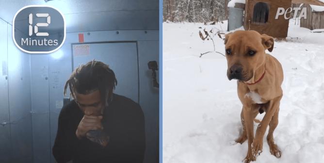 Tyrann Mathieu: Cold Dog 0:30