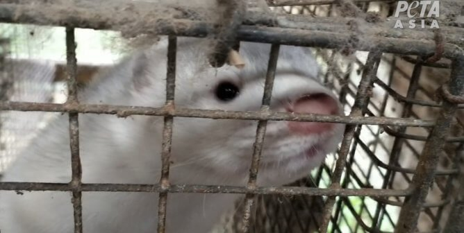 Which Companies Are Still Selling Fur From Bludgeoned Sables and Beheaded Rabbits?