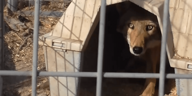VIDEO: Suffering, Neglect, and Death at Hollywood Animal Supplier