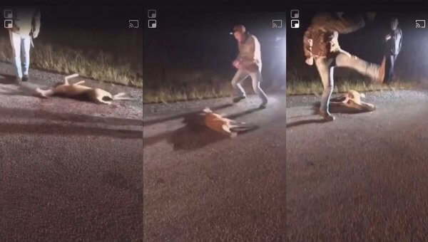 Victory: Man Who Kicked Baby Deer Gets Jail Time!