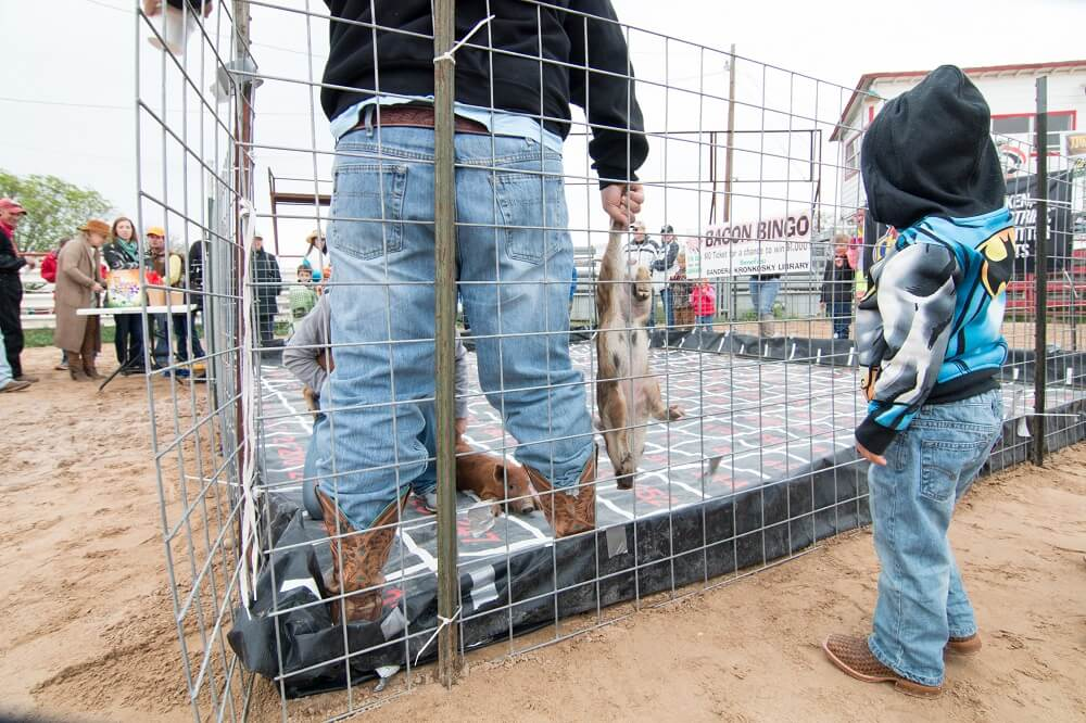 carrying baby pig by the legs at the Bandera Ham Rodeo