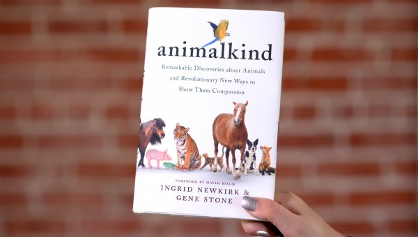 animalkind book held up by a hand with silver nails on a brick background