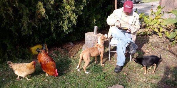 Winner of PETA's Chicken Star Search