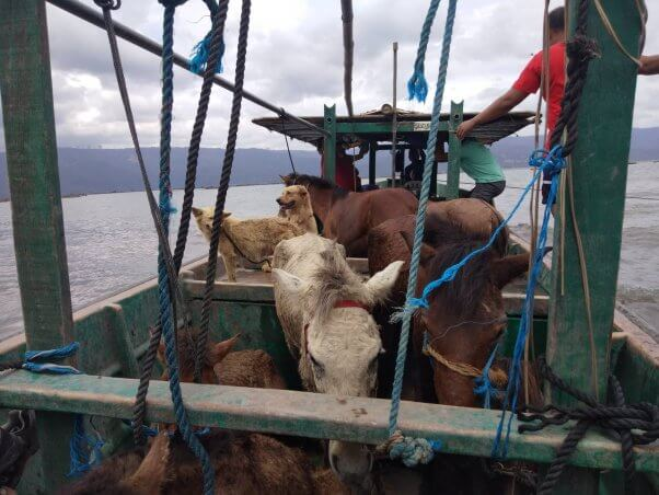 PETA Asia Taal Volcano Rescue Effort