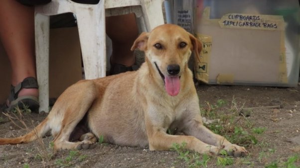 PETA Asia Rescues Animals From Taal Island