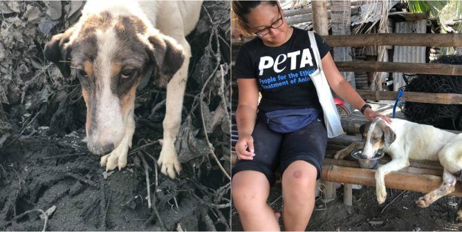 Video: Rescuers Save Dog Wrapped in Vine for Days on Taal Volcano
