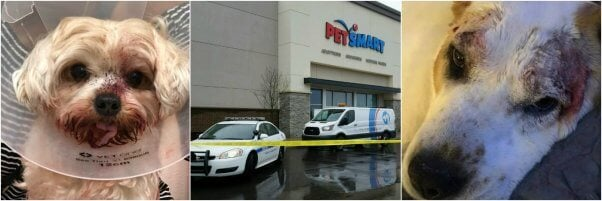 Main Image for Ongoing List of PetSmart and Petco Grooming Injuries and Deaths