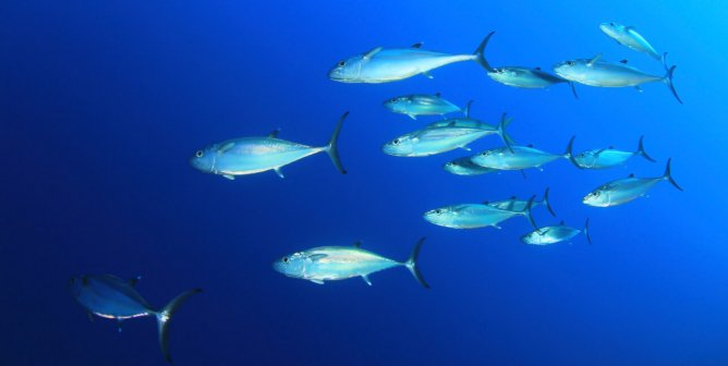 Top 10 Reasons to Not Eat Tuna