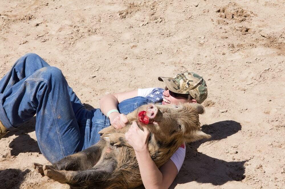bander ham rodeo pig bleeding